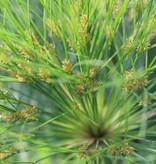 Botanische Tuinenzeep I
