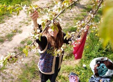 http://www.werfzeep.blog/oogst-nl/bloesems-plukken-bloesemzeep-in-de-maak/