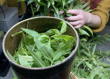 http://www.werfzeep.blog/wildpluk/botanische-tuinen-ii-pluk-en-hydrolaat/