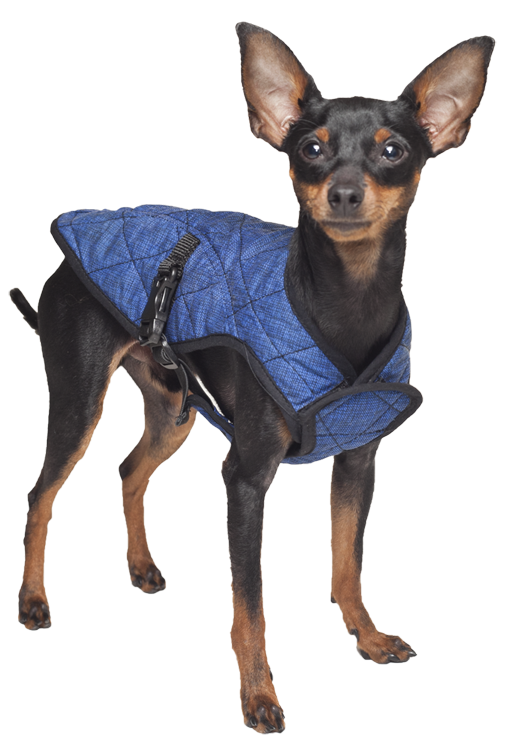 Aqua Coolkeeper Dog Cooling Vest Pacific Blue Koelproduct Nl