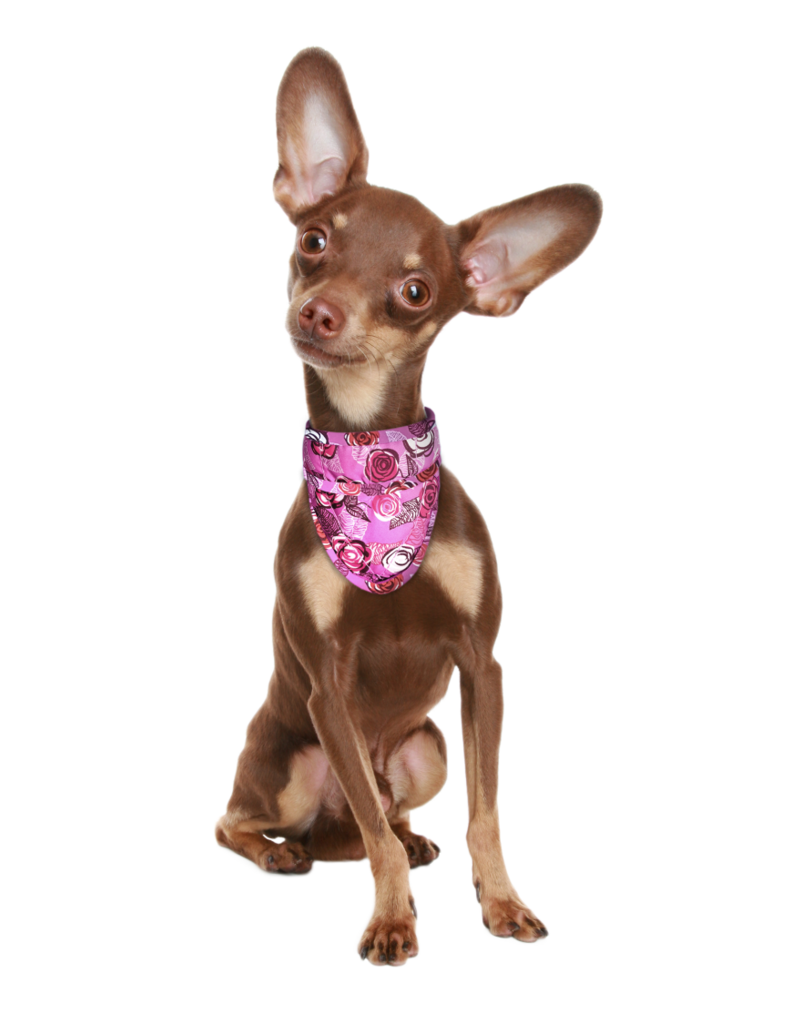 Aqua Coolkeeper Cooling pet bandana Roses