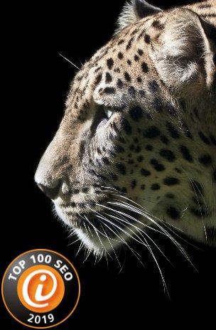 zu den Leistungen der Internetagentur Werbeagentur seo-leopard ek