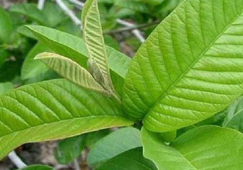 E.O. PLANT