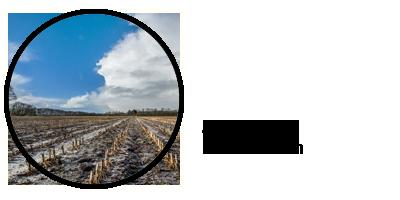 Zoeken op maisvelden