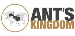 Ant's Kingdom