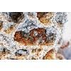 Atta cephalotes 50-150, alleen afhalen in Apeldoorn
