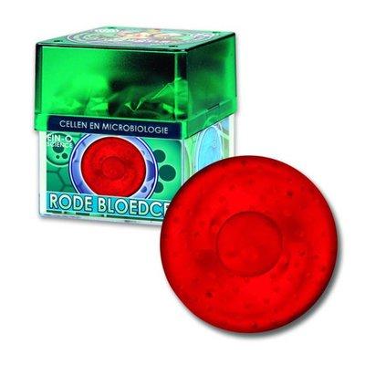 Ein-O Science Ein O science Cellen Rode bloedcel