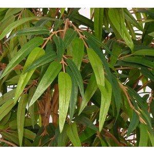 Bamboe Plant 180cm Groen