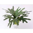 Hertshoorn Plant 50cm