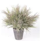 Grassbush Plant 40cm Grijsgroen
