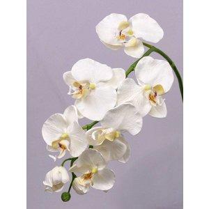 Orchidee Tak 75cm Creme Wit