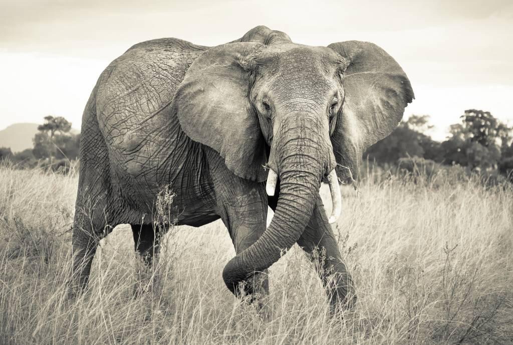 Scenics Edition 2 Fotobehang Komar Dieren Behang Elephant