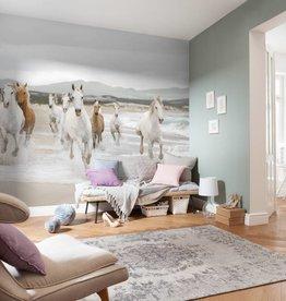 Scenics Edition 2 Fotobehang Komar Dieren Behang White Horses