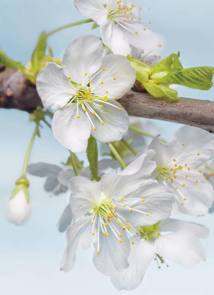 Flower & Textures Edition 1 Fotobehang Komar Bloemen Behang Blossom