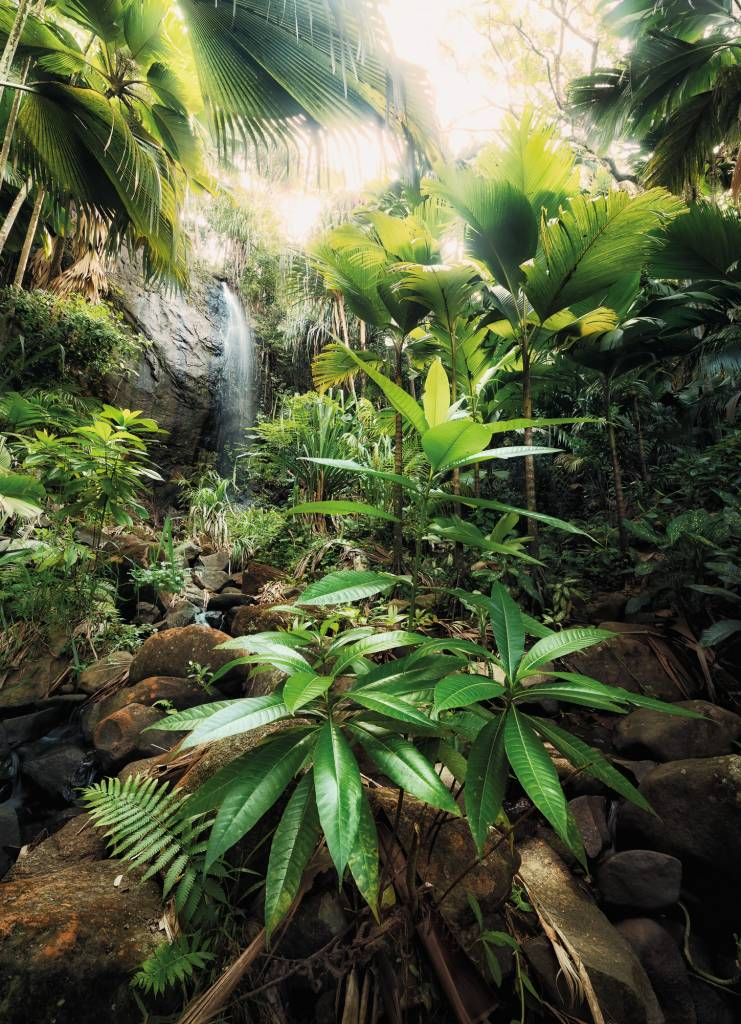 Scenics Edition 2 Fotobehang Komar Natuur Behang Spirit
