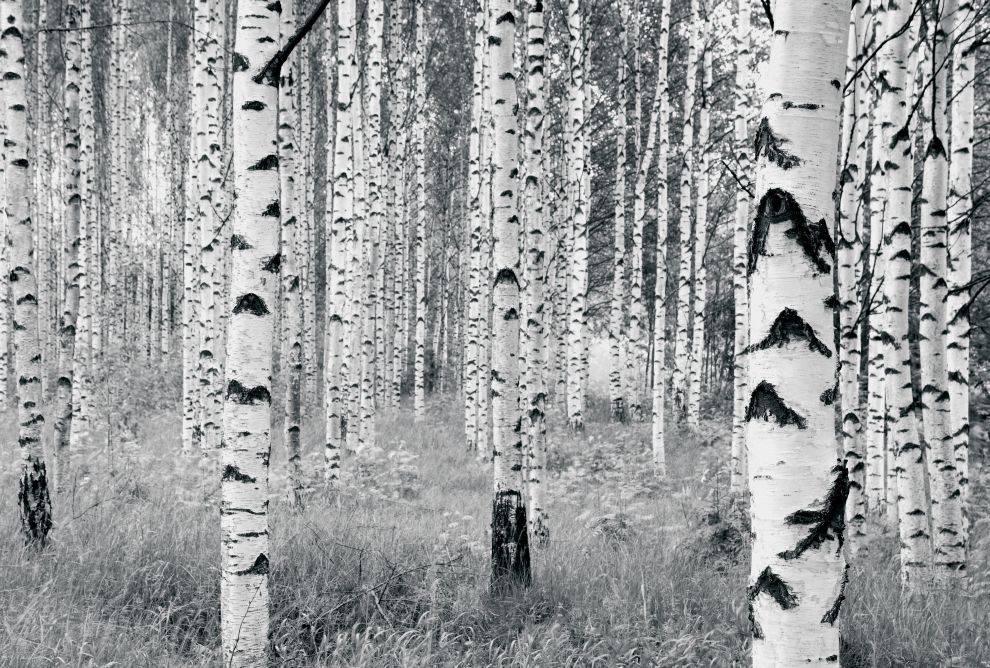 Munich Editon 1 Fotobehang Komar Natuur Behang Woods