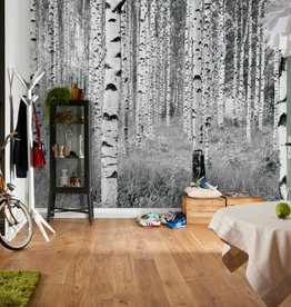 Into Illusions Edition 2 Fotobehang Komar Natuur Behang Woods XXL