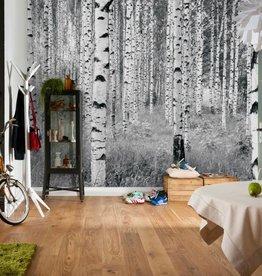 Into Illusions Fotobehang Komar Natuur Behang Woods XXL