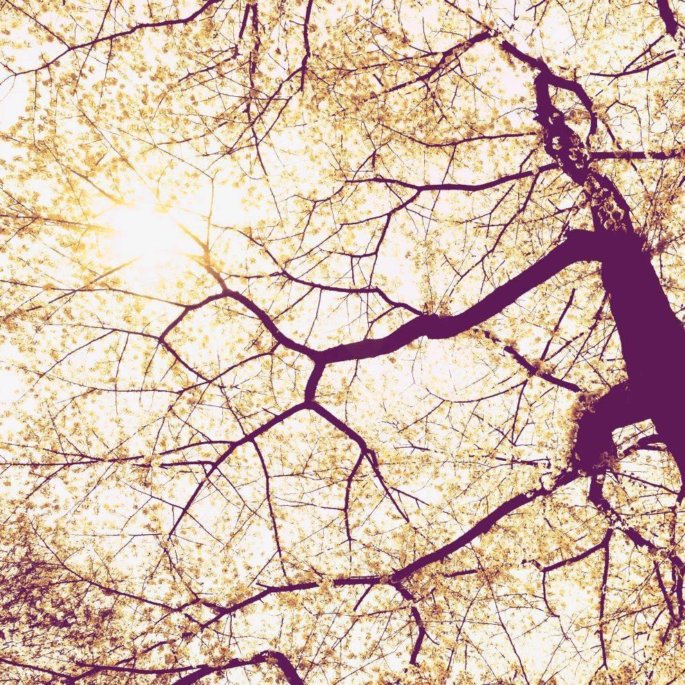 Munich Editon 1 Fotobehang Komar Natuur Behang Sunshine