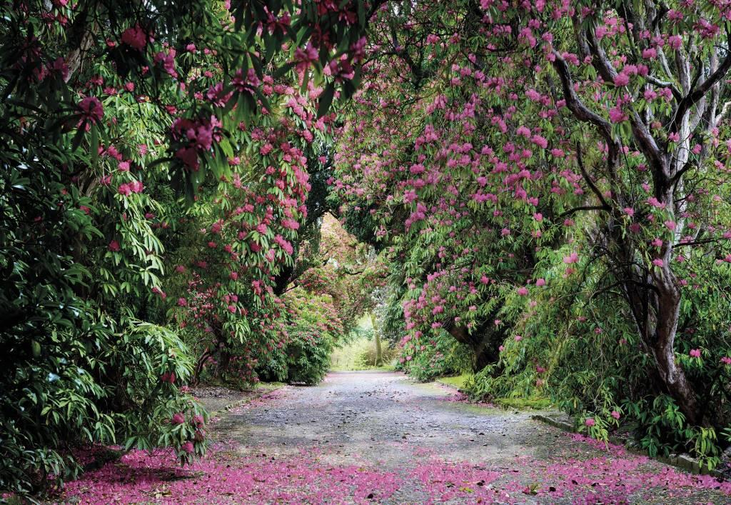 Scenics Edition 2 Fotobehang Komar Natuur Behang Wicklow Park