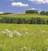 Scenics Edition 2 Fotobehang Komar Natuur Behang Meadow
