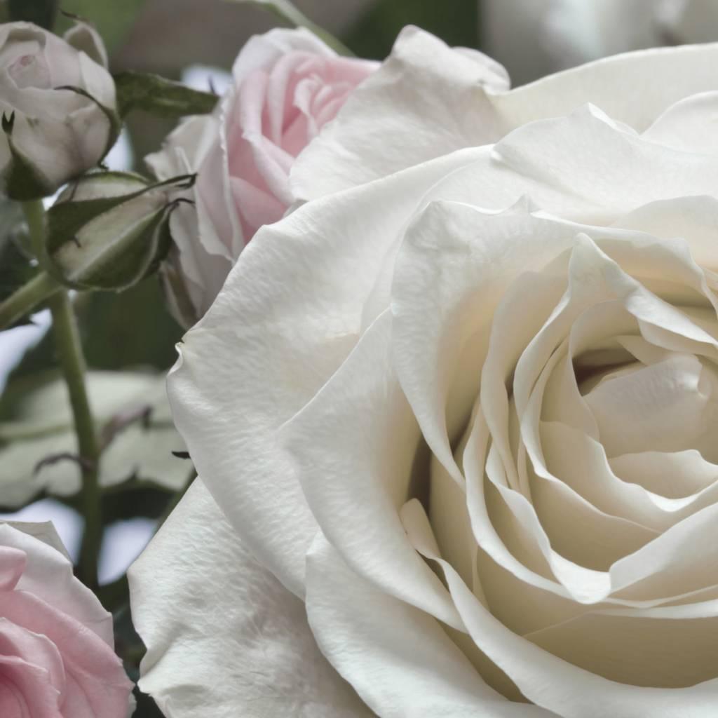 Flower & Textures Edition 1 Fotobehang Komar Bloemen Behang Floraison