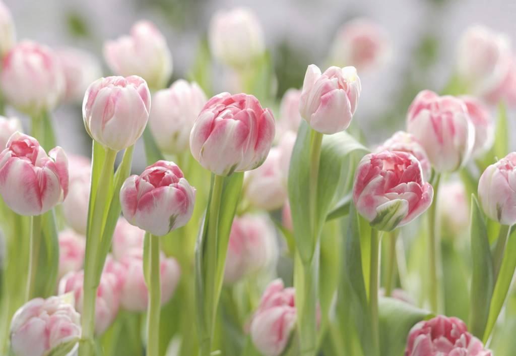 Flower & Textures Edition 1 Fotobehang Komar Bloemen Behang Secret Garden