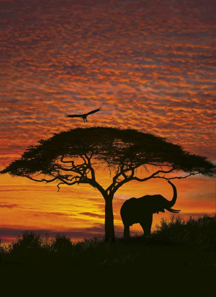 Scenics Edition 2 Fotobehang Komar Natuur Behang  African Sunset