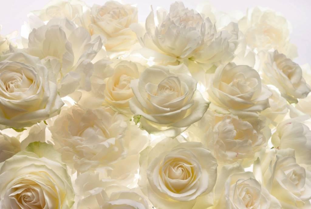Flower & Textures Edition 1 Fotobehang Komar Bloemen Behang Shalimar