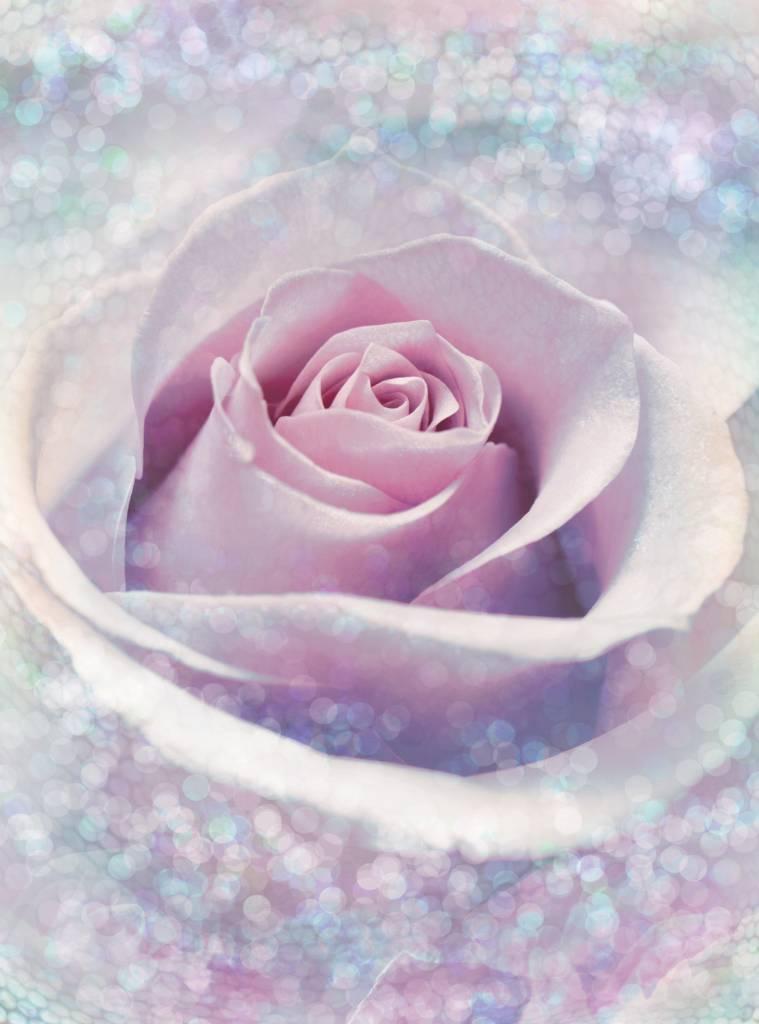 Flower & Textures Edition 1 Fotobehang Komar Bloemen Behang Delicate Rose