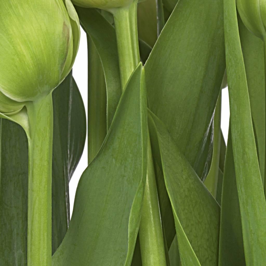 Flower & Textures Edition 1 Fotobehang Komar Bloemen Behang Tulips