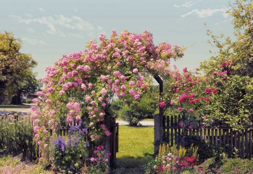 Flower & Textures Edition 1 Fotobehang Komar Bloemen Behang Rose Garden