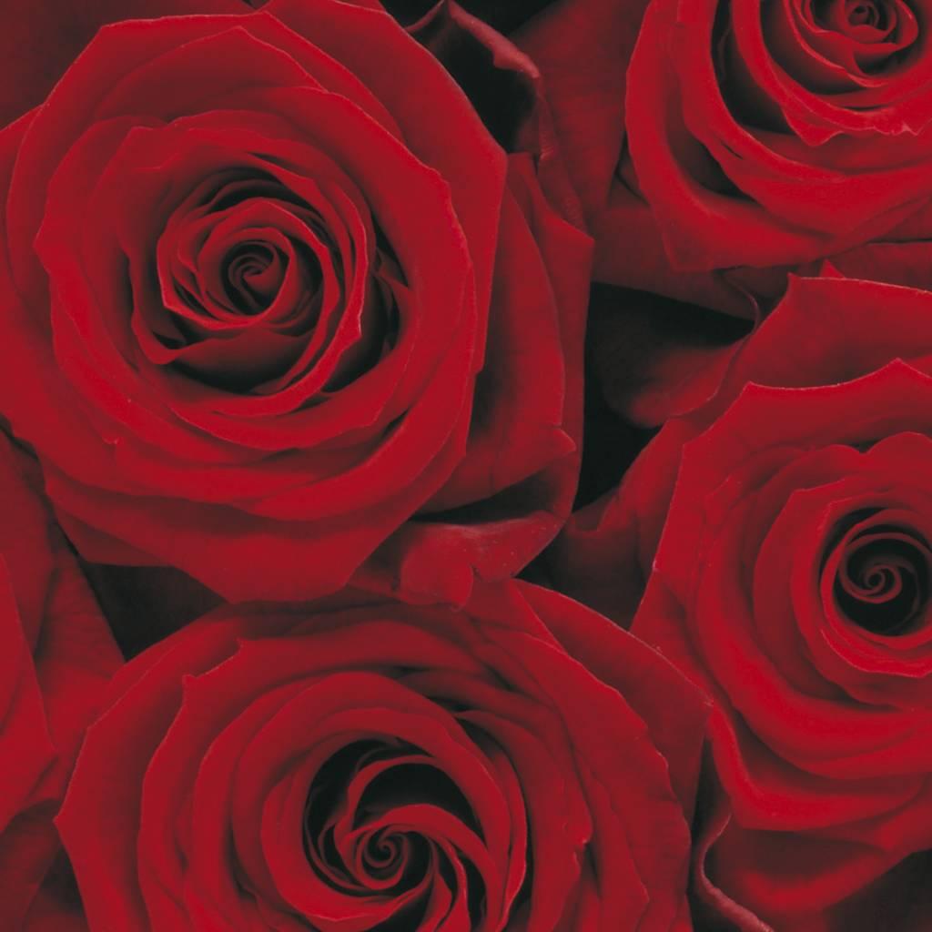 Flower & Textures Edition 1 Fotobehang Komar Bloemen Behang Roses