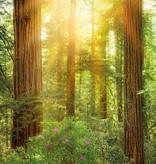 Into Illusions Edition 2 Fotobehang Komar Natuur Behang Redwood