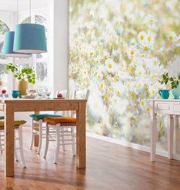 Flowers & Textures Fotobehang Komar - Bloemen behang Daisies