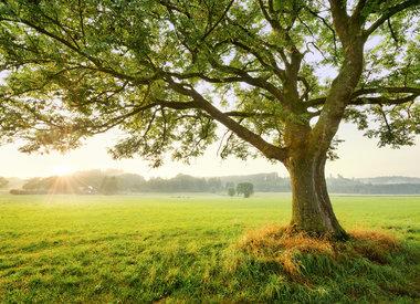 Bomen behang