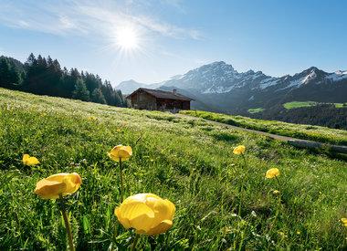 Alpen behang