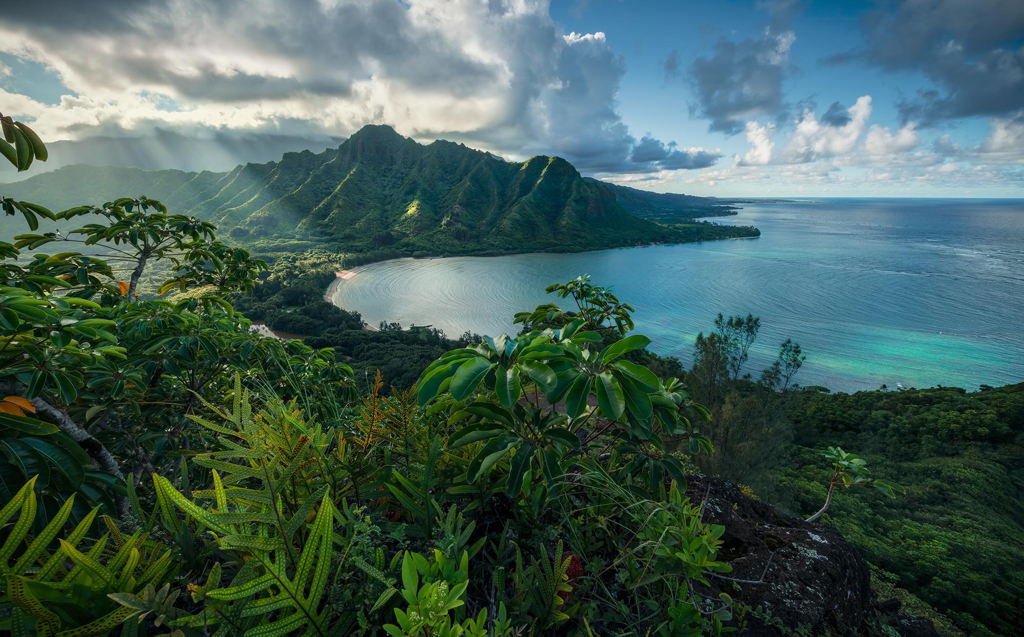 Stefan Hefele Edition 2 Fotobehang Komar - Natuur behang JURASSIC ISLAND