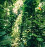 Stefan Hefele Edition 2 Fotobehang Komar - Natuur behang GREEN LEAVES