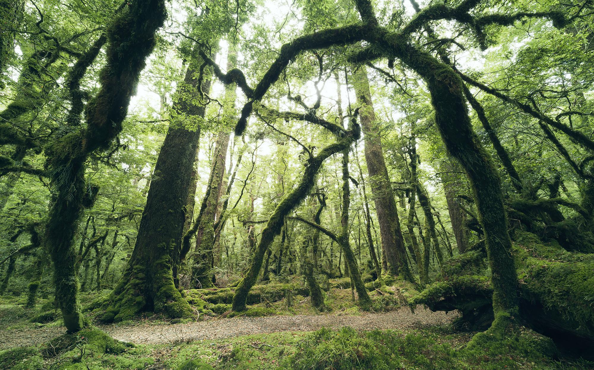 Stefan Hefele Edition 2 Fotobehang Komar - Natuur behang ANCIENT GREEN
