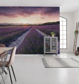 Stefan Hefele Edition 2 Fotobehang Komar - Bloemen behang Lavender Dream