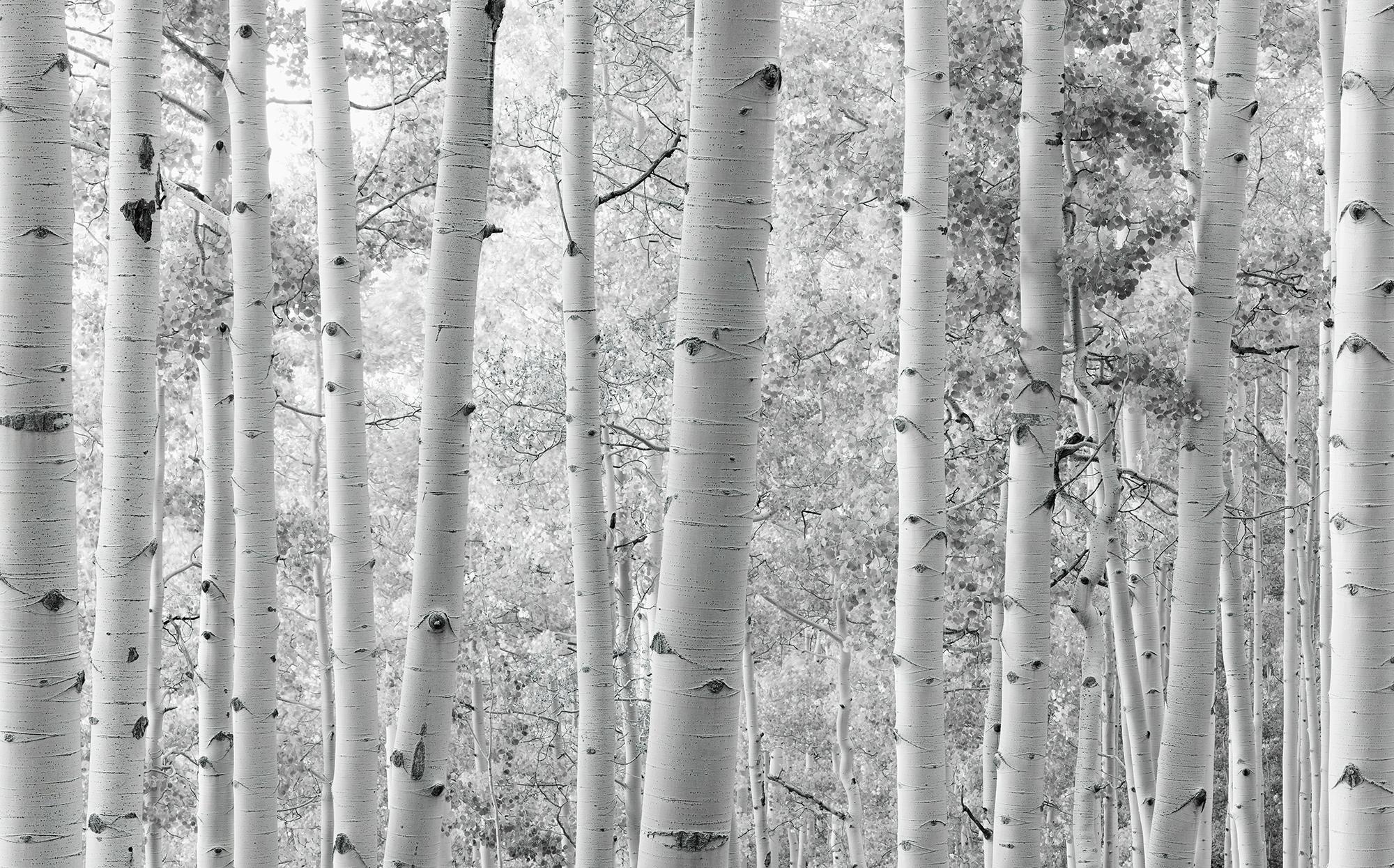 Stefan Hefele Edition 2 Fotobehang Komar - Natuur behang ESPENWALD