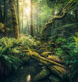 Stefan Hefele Edition 2 Fotobehang Komar - Natuur behang ELVES CATHEDRAL