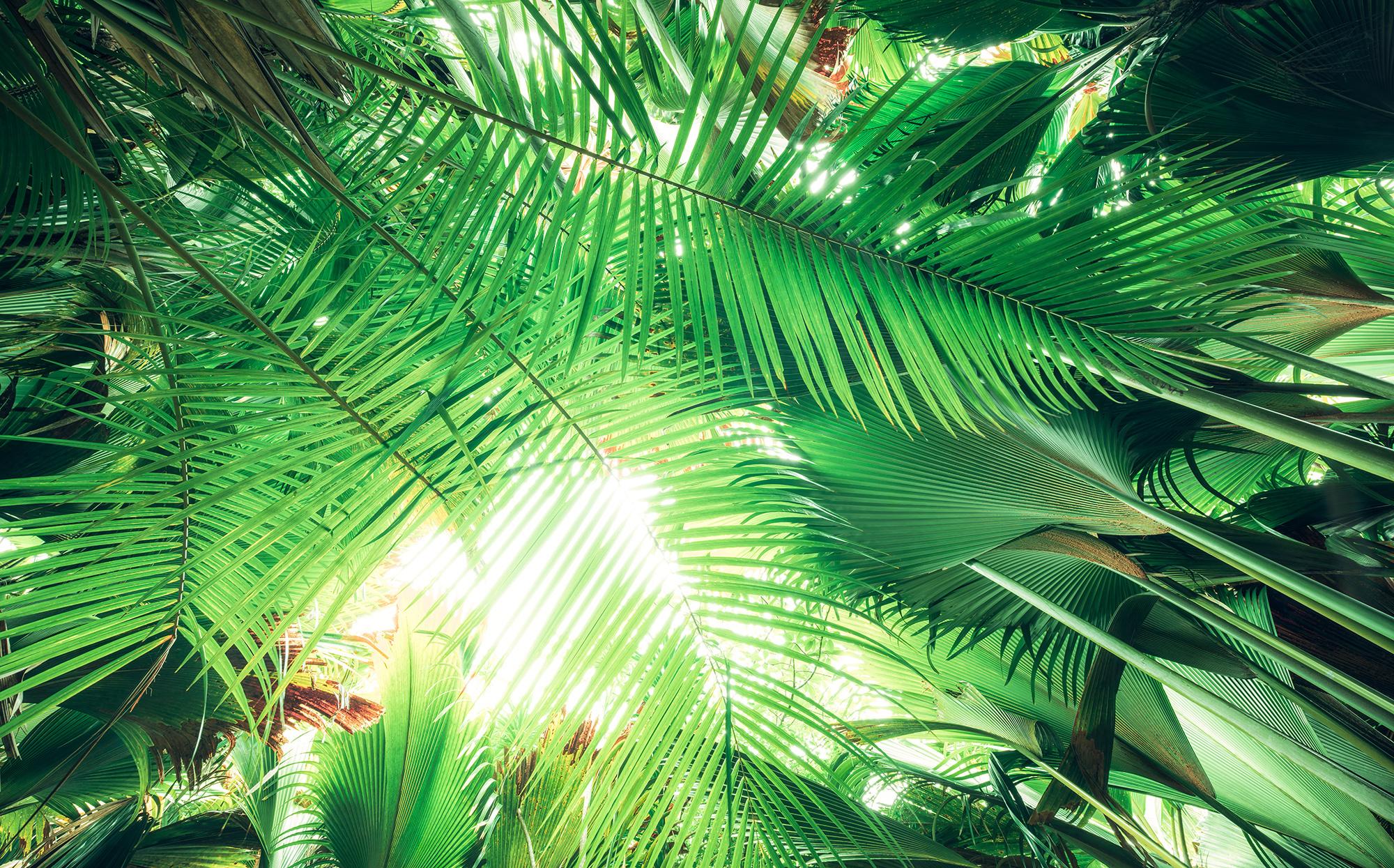 Stefan Hefele Edition 2 Fotobehang Komar - Natuur behang DSCHUNGELDACH