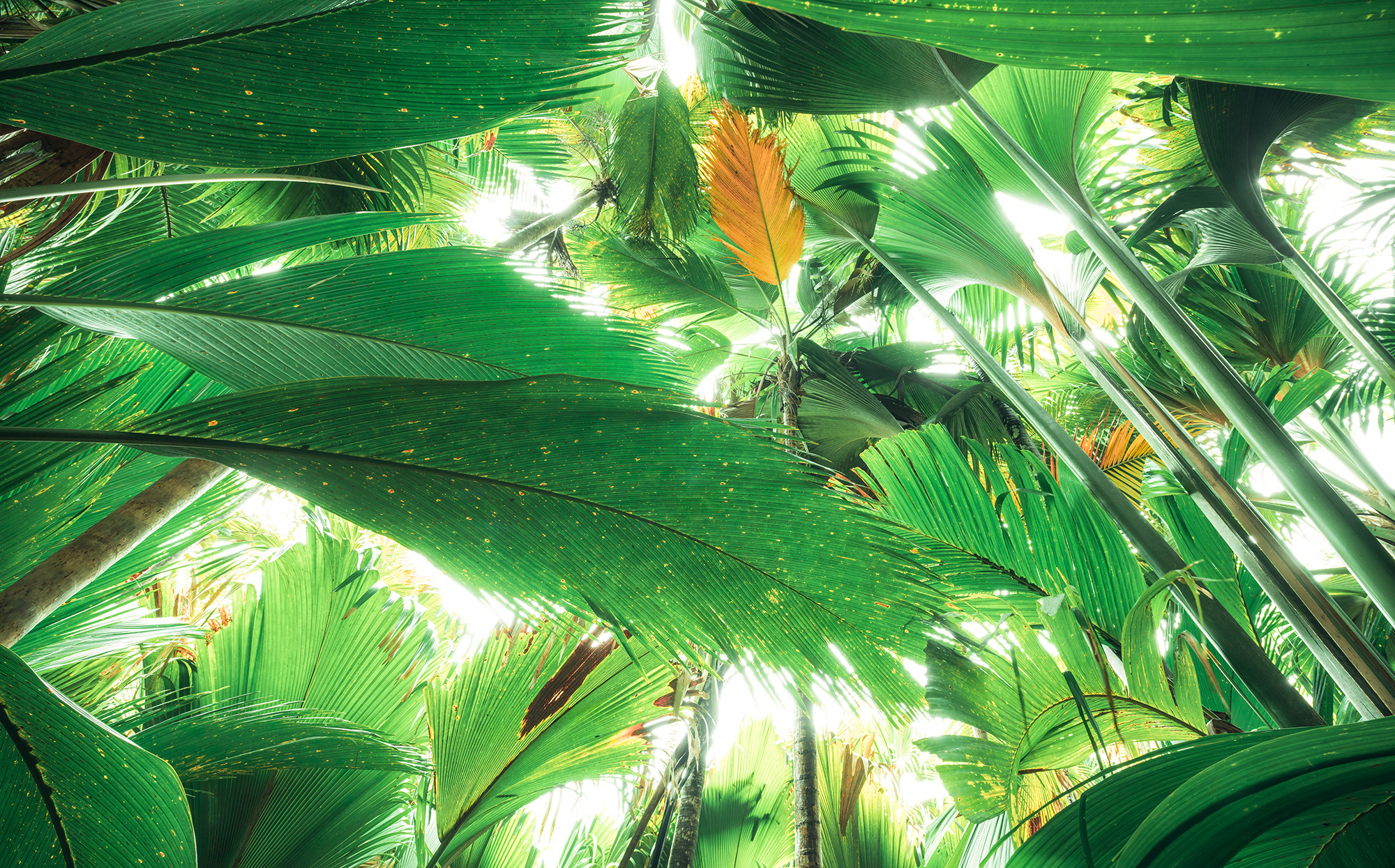 Stefan Hefele Edition 2 Fotobehang Komar - Natuur behang DSCHUNGELDACH II