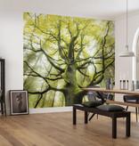Stefan Hefele Edition 2 Fotobehang Komar - Natuur behang DER TRAUMBAUM