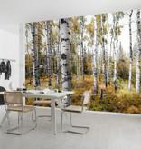 Stefan Hefele Edition 2 Fotobehang Komar - Natuur behang COLORFUL ASPENWOODS