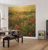Stefan Hefele Edition 2 Fotobehang Komar - Bloemen behang POPPY WORLD