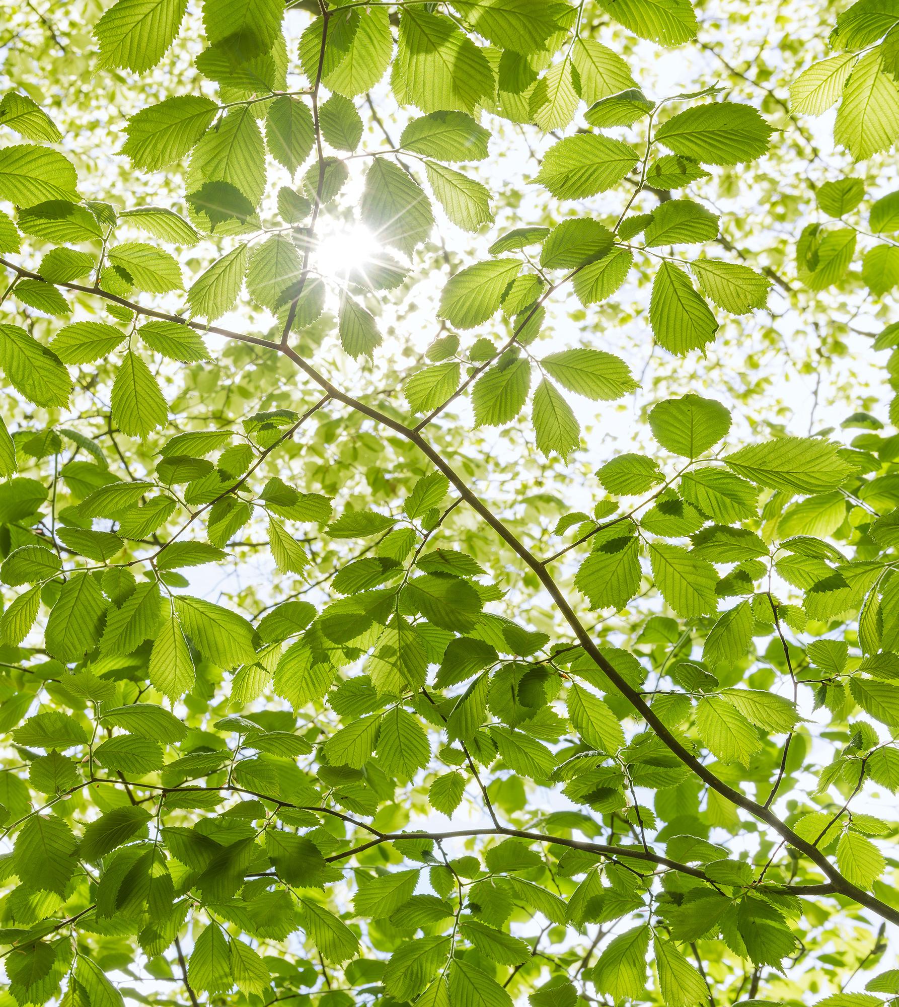 Stefan Hefele Edition 2 Fotobehang Komar - Natuur behang IM FRÜHLINGSWALD