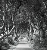 Stefan Hefele Edition 2 Fotobehang Komar - Natuur behang FOREVENUE